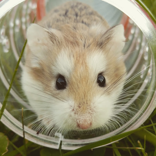 Picture of hamster